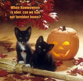 When Hawwoween is ober, can we hab our forebber home?