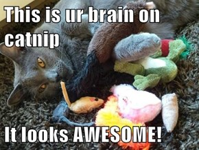 This is ur brain on catnip  It looks AWESOME!