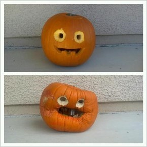 Pumpkin After Eating a Lemon