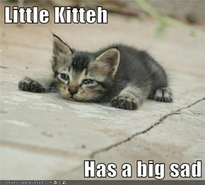 I'll Cheer You Up, Little Kitteh!