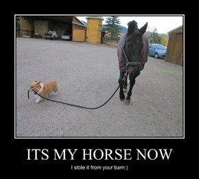 The Horse Is Probably Happier with the Dog