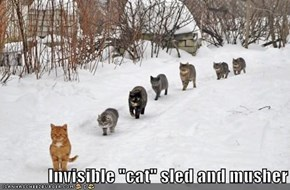 "Invisible ""cat"" sled and musher"