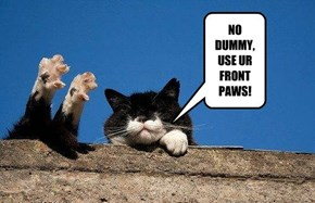 NO DUMMY, USE UR FRONT PAWS!