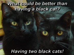 What could be better than having a black cat?  Having two black cats!
