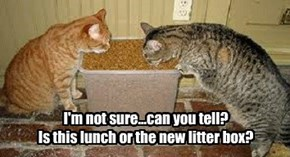 I'm not sure...can you tell? Is this lunch or the new litter box?