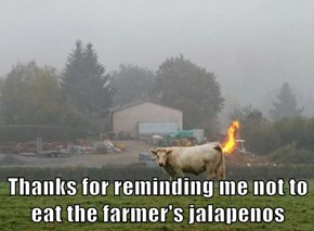 Thanks for reminding me not to eat the farmer's jalapenos