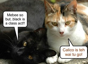 Calico is teh wai tu go!