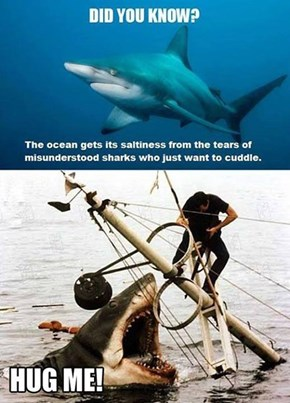 Shark Facts!