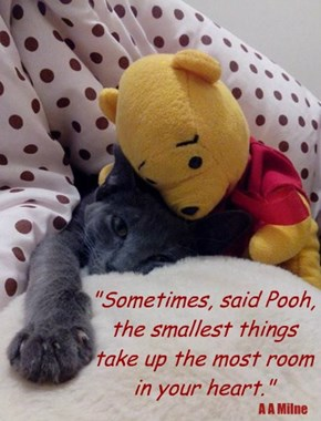 """Sometimes, said Pooh, the smallest things take up the most room in your heart."""