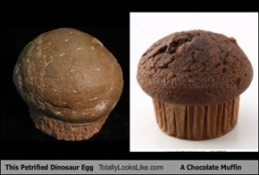 This Petrified Dinosaur Egg Totally Looks Like A Chocolate Muffin