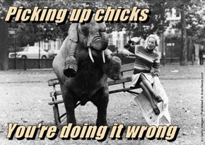 Picking up chicks   You're doing it wrong