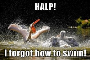 HALP!  I forgot how to swim!