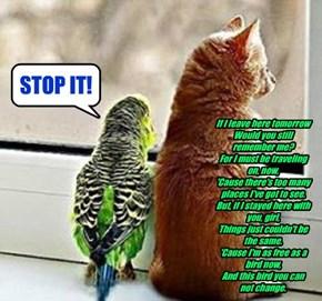 Free Bird!!