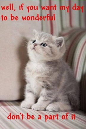 I plan to do some things you don't know kittens can do