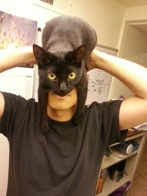 He Is The Night, Catman