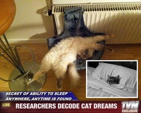 SECRET OF ABILITY TO SLEEP ANYWHERE, ANYTIME IS FOUND -   RESEARCHERS DECODE CAT DREAMS