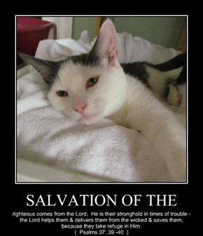 SALVATION OF THE