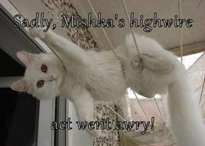 Sadly, Mishka's highwire  act went awry!
