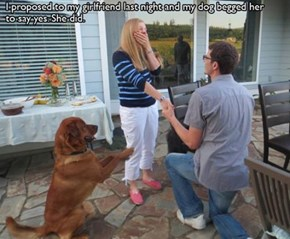 Truly a Groom's Best Friend
