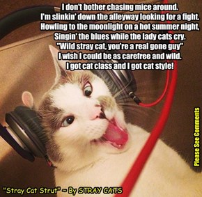 """Stray Cat Strut"""