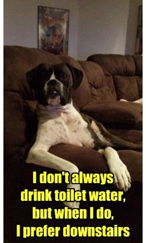 The Most Interesting Dog in the House