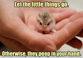 Sound Advice from a Tiny Shrew