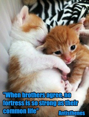 """When brothers agree, no fortress is so strong as their common life"""