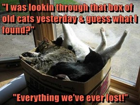 """I was lookin through that box of old cats yesterday & guess what I found?""  ""Everything we've ever lost!"""