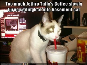 Too much Jethro Tully's Coffee slowly turns ceiling cat into basement cat