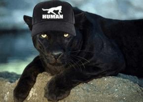 Puma Con la Gorra de Human