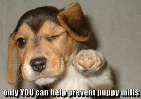 only YOU can help prevent puppy mills