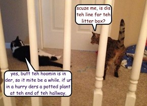 scuze me, is dis teh line for teh litter box?