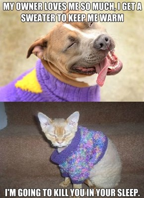Some Pets are More Fashionable Than Others