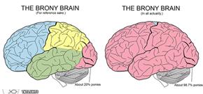 The Brony Brain