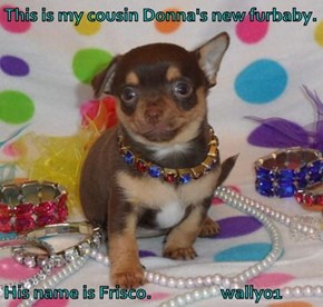 This is my cousin Donna's new furbaby.  His name is Frisco.                  wally01