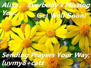 Alisa ,   Everbody's Missing You..  Sending Prayers Your Way,      luvmy8+catz