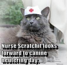 Nurse Scratchit looks forward to canine neutering day.