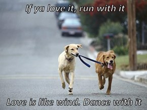 If ya love it, run with it  Love is like wind. Dance with it