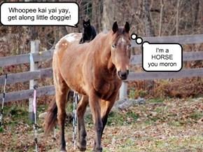 I'm a HORSE you moron
