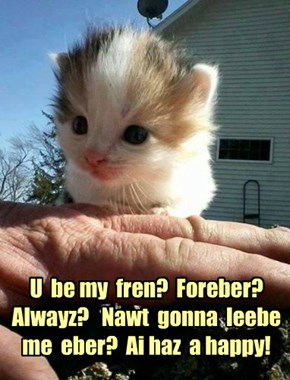U  be my  fren?  Foreber?  Alwayz?   Nawt  gonna  leebe  me  eber?  Ai haz  a happy!