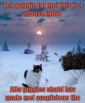 Teh goggie tol mei this iz a mouse igloo  Alla giggles shuld hav made mei suspicious tho