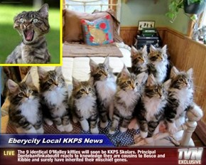 Eberycity Local KKPS News - The 9 identical O'Malley kitties will soon be KKPS Skolars. Principal Dontebanfinkaboutit reacts to knowledge they are cousins to Bosco and Kibbie and surely have inherited their mischief genes.