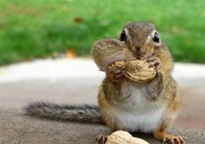 Squee Spree Winner: The Chipmunk!