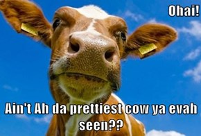 Ohai!  Ain't Ah da prettiest cow ya evah seen??