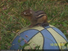 Chipmunk got game!