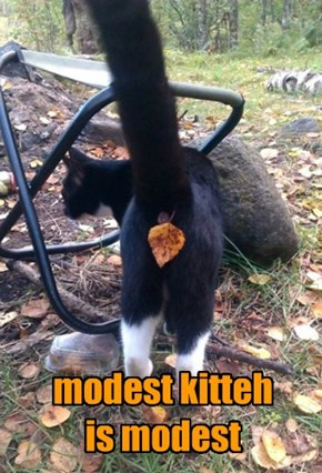 modest kitteh is modest