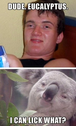 Super High Koala Bear