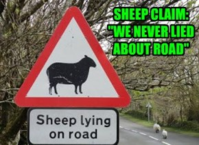 Sheep never lie...