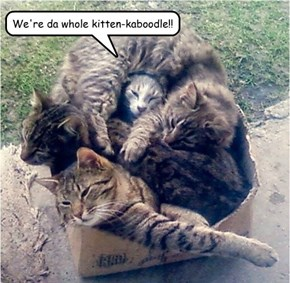 We're da whole kitten-kaboodle!!