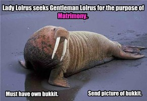 Lady Lolrus Seeks Gentleman Lolrus: Only Lolrus sincere lolrus need apply.